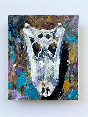 Gator Skull Study