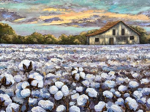"Cotton Harvest 24x36"" Giclee"