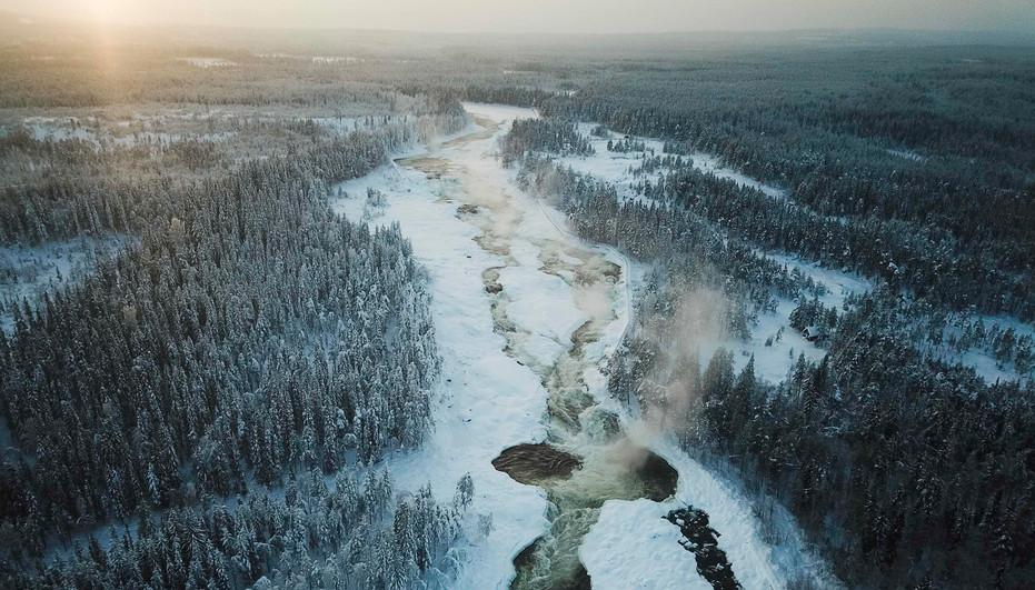 Forrest, north of Sweden