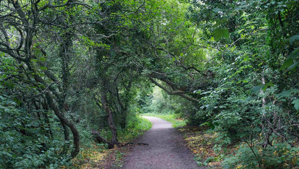 Forrest path, Gotland Sweden