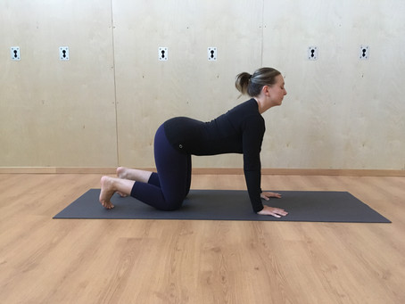 10 Mobility Moves for a Happy Back