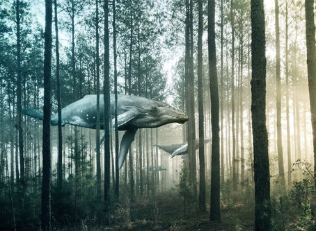 The Whale & The Kauri