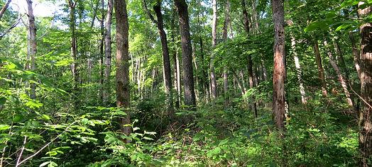 The big woods.jpg