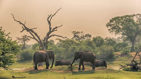Minneriya Jeep Safari.jpg