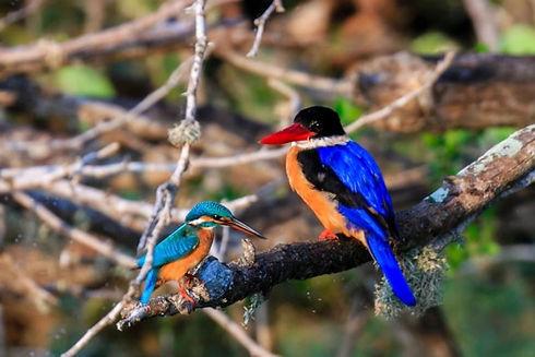 Kaudulla National Park.jpg