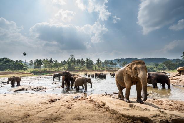 Minneriya Sri Lanka