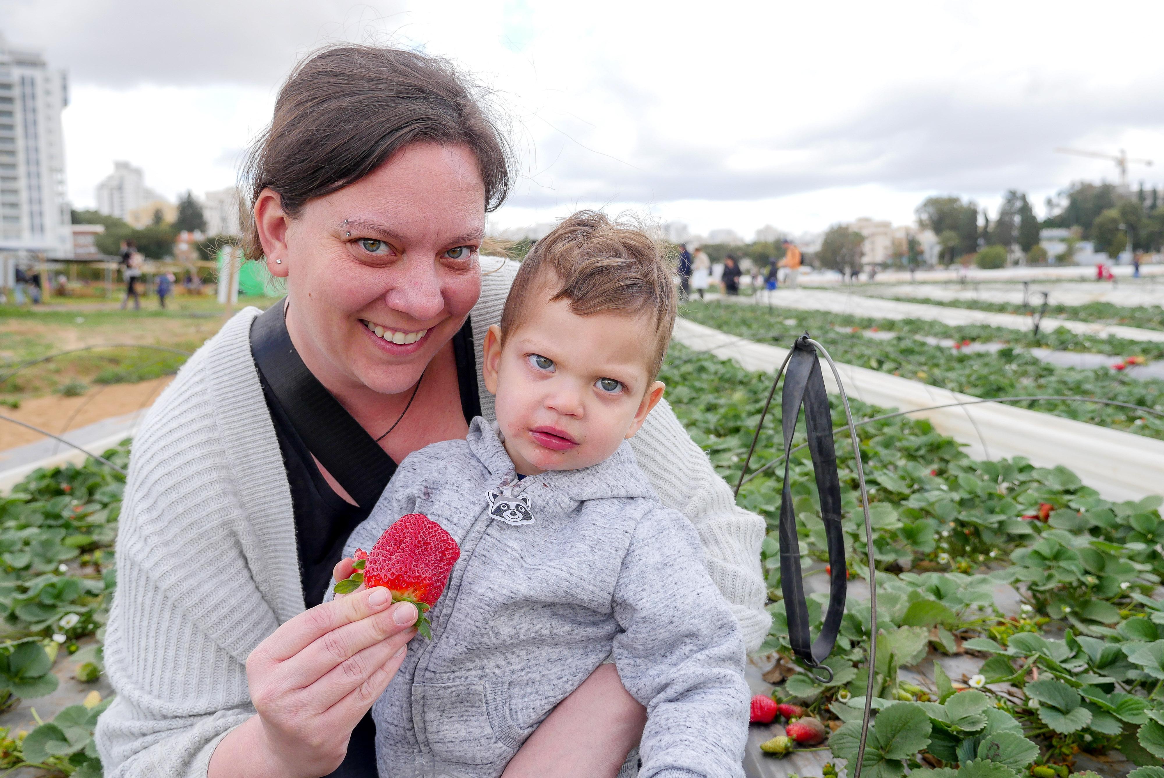 קטיף תותים למשפחות