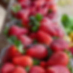 קטיף תותים בהוד השרון