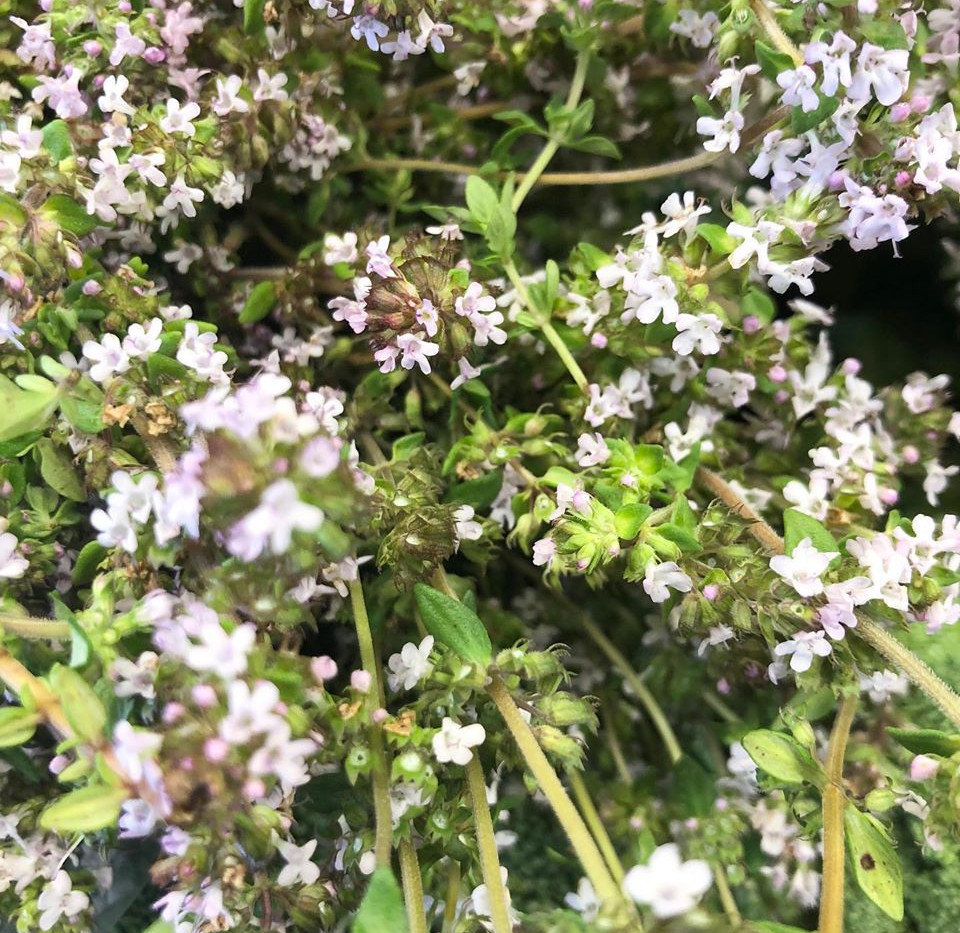 flowerthyme.jpg