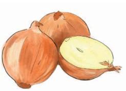 Urban farming, Chicago gardening, onions