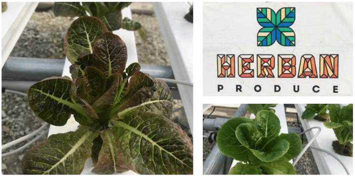 Urban farming, Chicago gardening