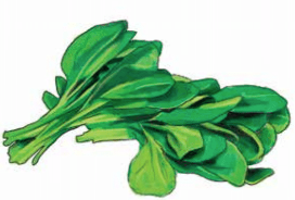 Urban farming, Chicago gardening, spinach