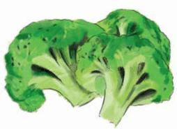 Urban farming, Chicago gardening, broccoli