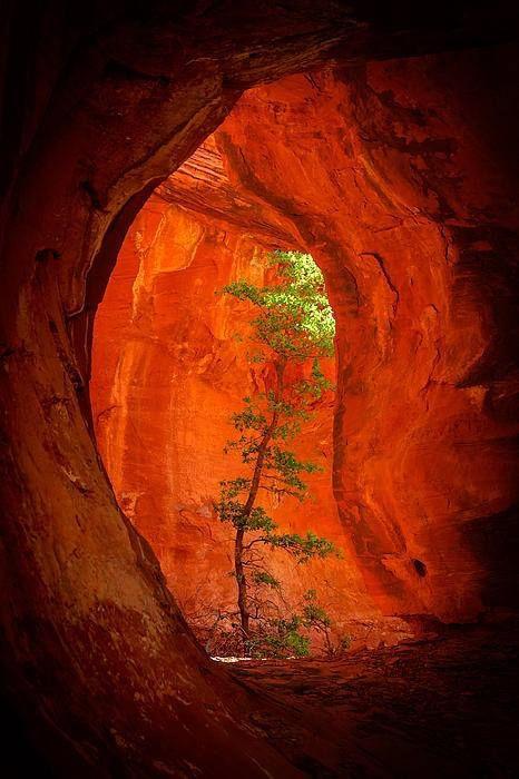 Llevar tu Luz a la Tierra Herida