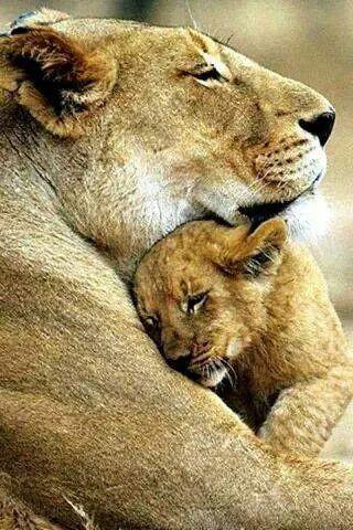 A todas las Madres...