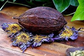 Cacao 4 loto.JPG