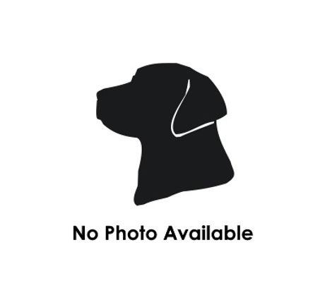 No Pic.jpg