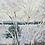 Thumbnail: Abstract Birch