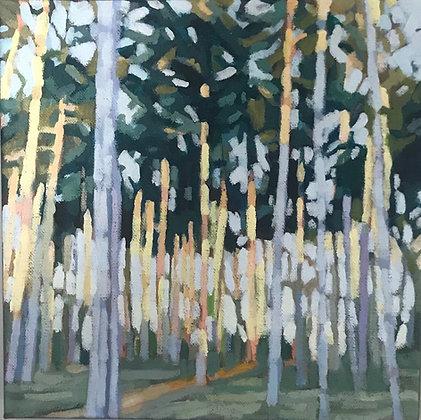 Baxter Woods Spring