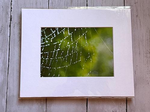 Spiderweb | 5x7
