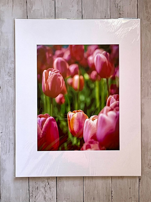Pink Tulips | 11x14