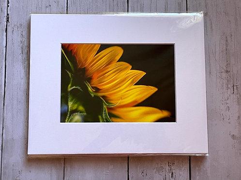 Macro Sunflower   5x7