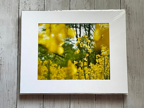 Mustard Plant | 8x10
