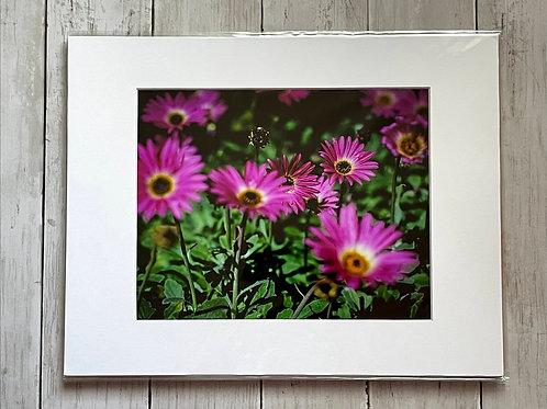 Purple Daisies | 8x10