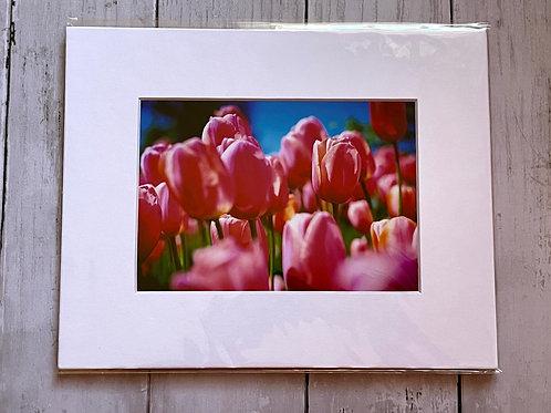 Tulip Festival (Pink) | 5x7