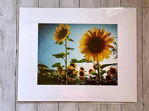 Sunflowers   11x14
