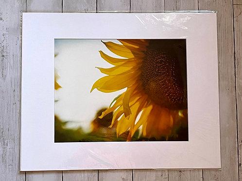 Sun Flare Sunflower   11x14