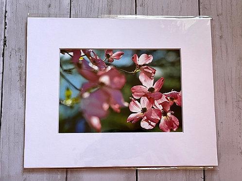 Pink Dogwoods | 5x7
