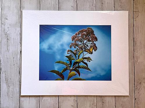 Butterfly Print | 11x14