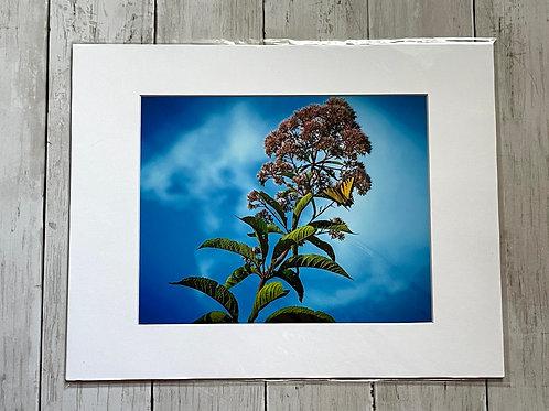 Butterfly Print | 8x10