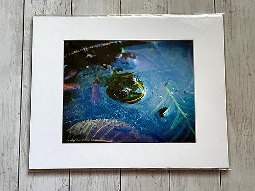 Frog Print 2 | 8x10