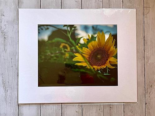 Sunflower Print | 11x14