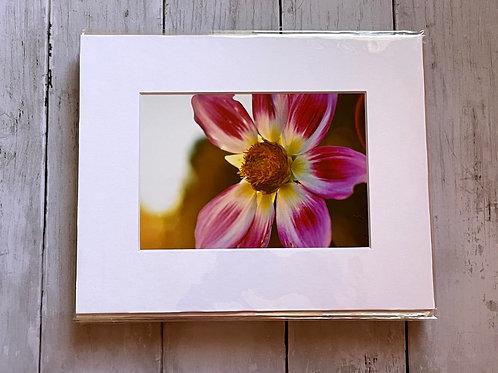 Sun Flare Floral | 5x7