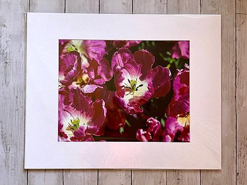 Longwood Tulips | 11x14