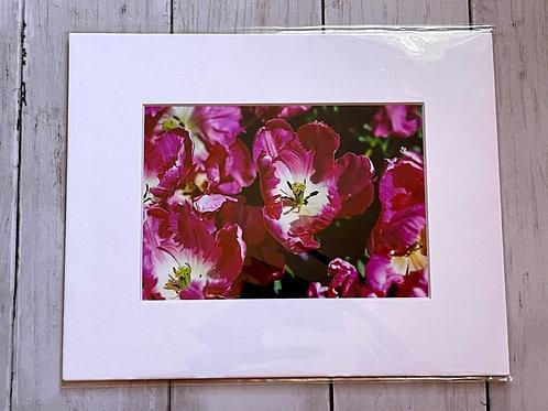 Longwood Tulips | 5x7