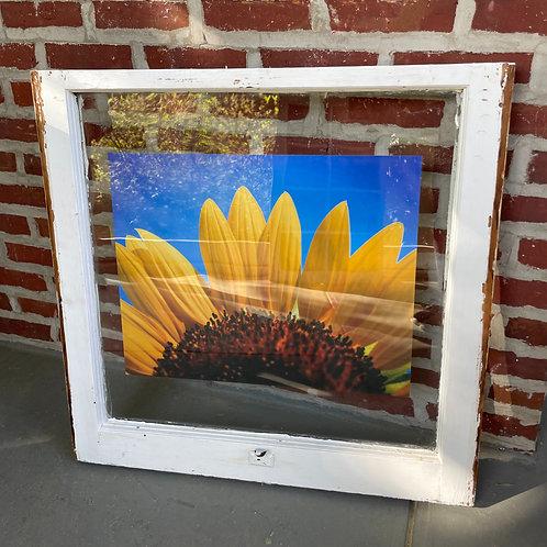 """28.50"""" x 28.50"""" Window Art"""