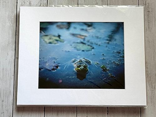 Frog Print 1 | 8x10