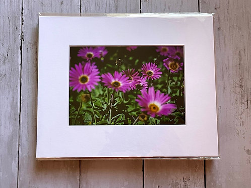 Purple Daisies | 5x7