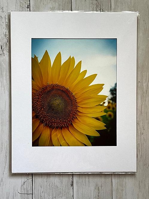 Sunflower Print | 8x10