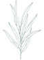 Mareike - Website Icons (Plant).png