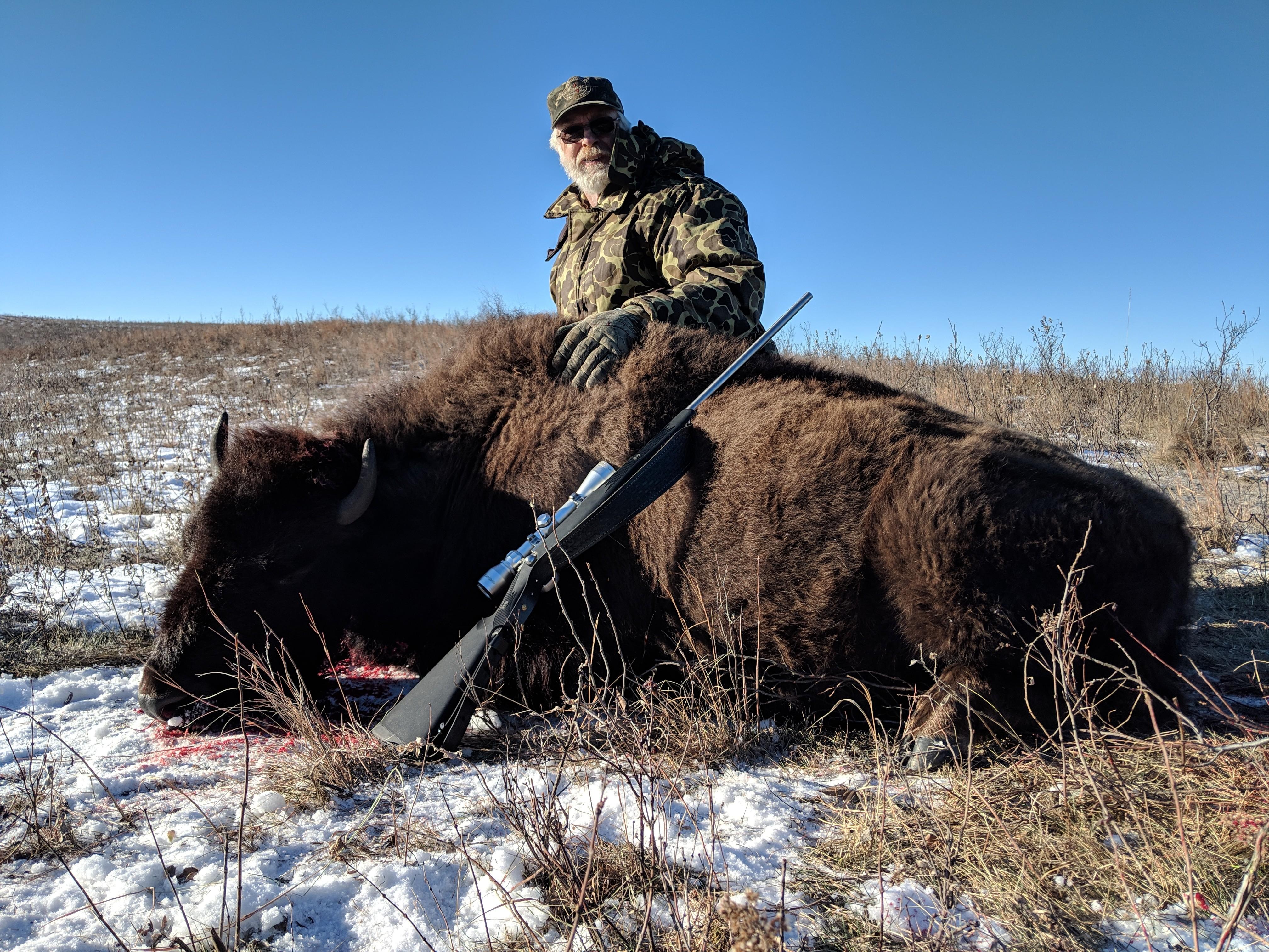 Bison Heifer
