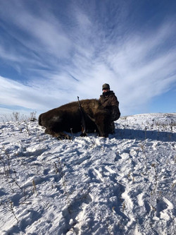 Bison Meat Cow Hunt