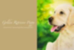 Coloured Pencil, Coloured Pastel Pencil and Soft Pastel Sticks of a Golden Retriever Puppy