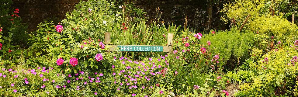 JMC-herb-garden-banner.jpg