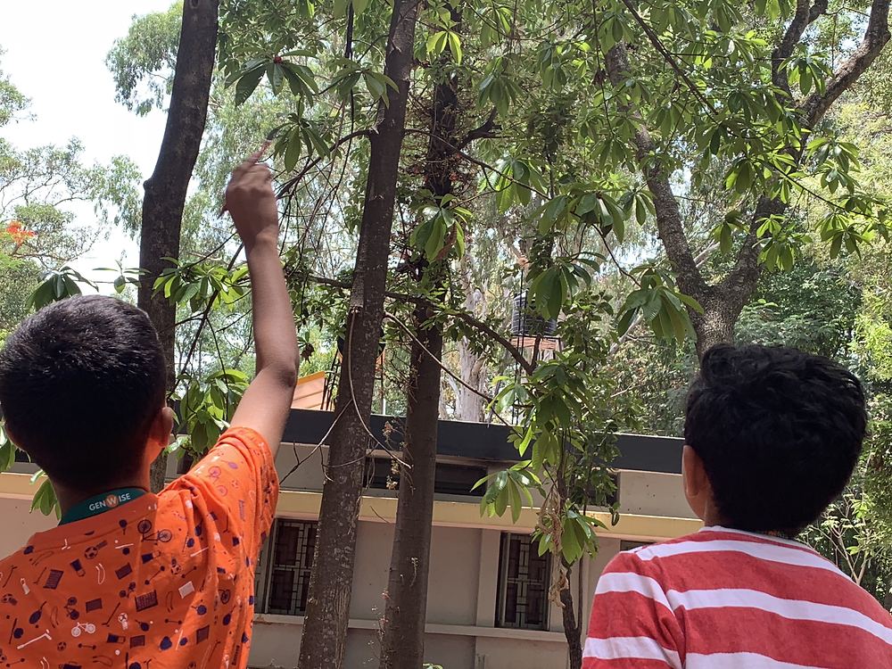 Trying to Estimate # of Leaves on the tree