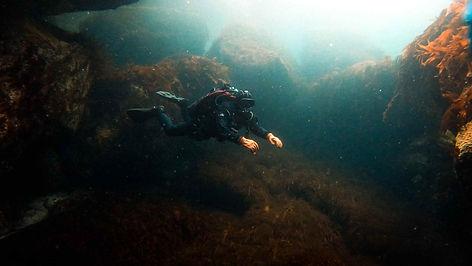дайвинг тур баренцево море нева дайверс